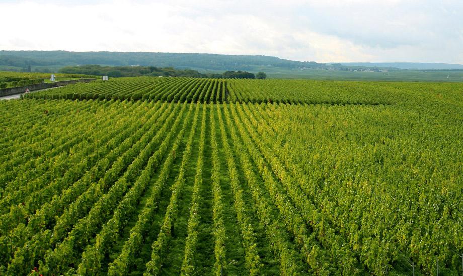 vingårder (1)