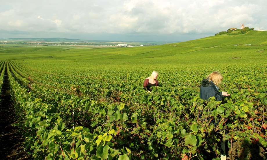 vingårder (8)