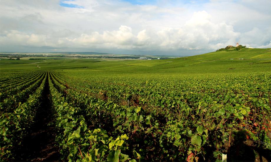vingårder (4)