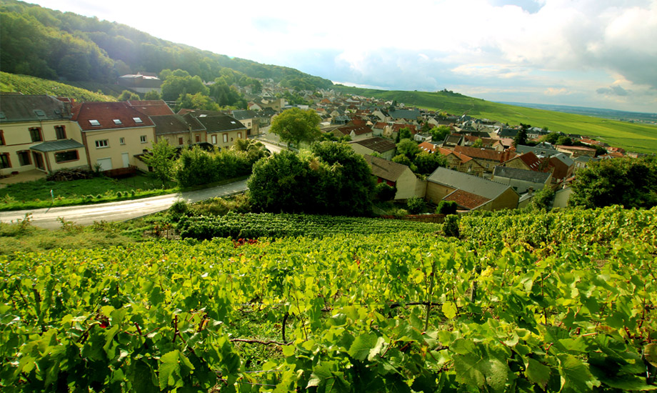 vingårder (7)