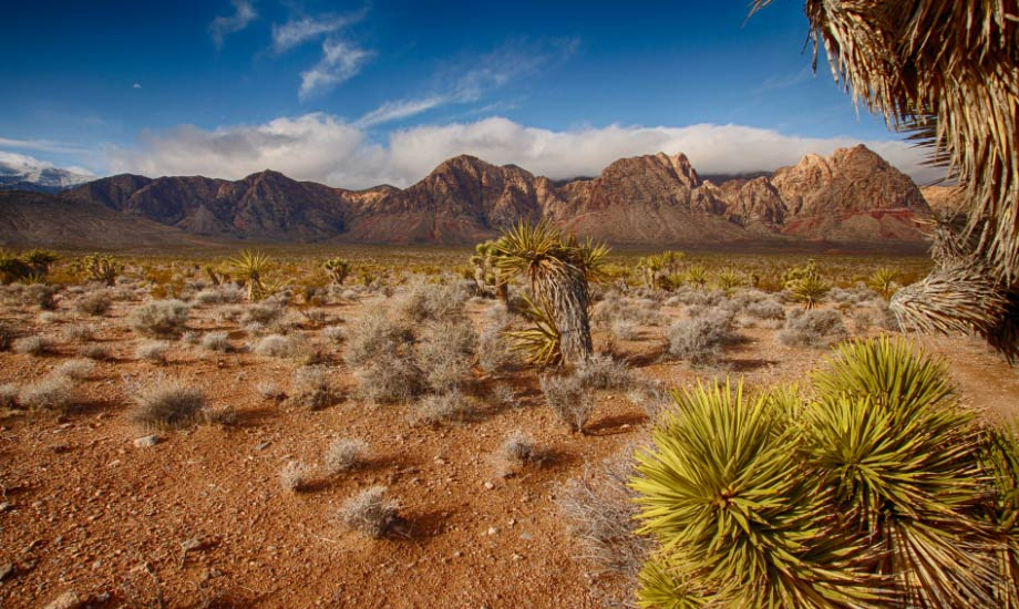 red-rock-canyon-1