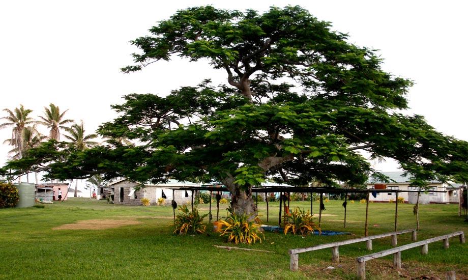 fiji navotua village homestay (11)